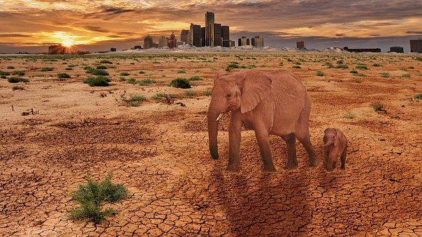 Desert, Travel, Nature, Sand, Dry, Steppe, Dust