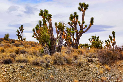 Cactus, Desert, Nature, Dry, Landscape, Plant, Tree