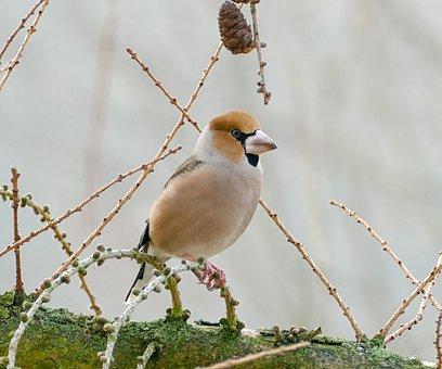 Bird, Animal World, Nature, Animal, Wild, Core Beisser