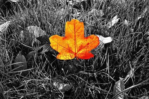 Leaf, Orange Leaf, Veins, Autumn Color, Grass