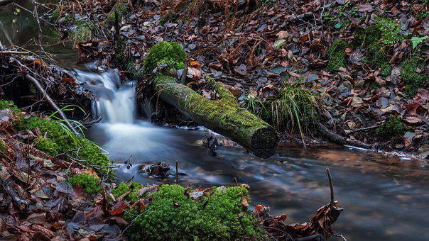 Nature, River, Waterfall, Autumn, Leaf, Mosses