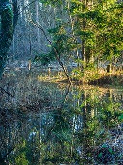 Nature, Tree, Landscape, River, Pool, Marsh, Water