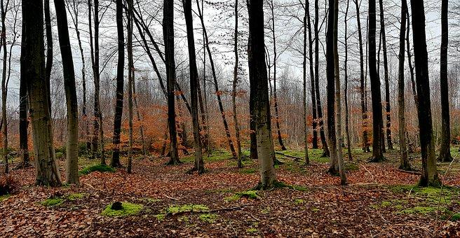 Forest, Wood, Tree, Nature, Landscape, Leaf, Autumn