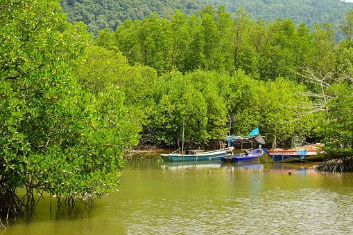 Nature, Mangrove, Mangrove Forest, Trees, Swamp, Water