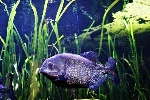 Aquarium, Nature, Underwater, Fish, Waters, Swim