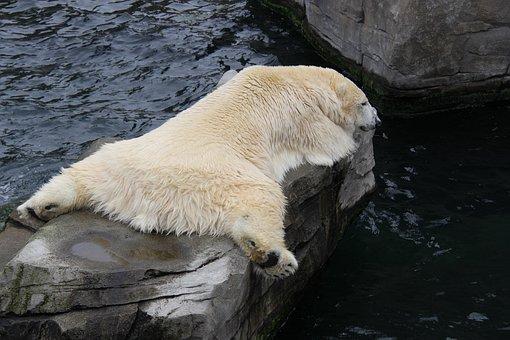 Nature, Animal World, Waters, Mammal, Animal, Ice
