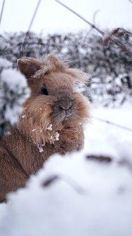 Rabbit, Winter, Snow, Nature, Animal, Cold, In Focus