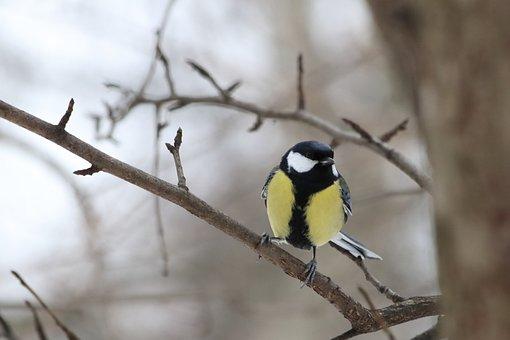 Bird, Living Nature, Nature, Outdoors, Animals