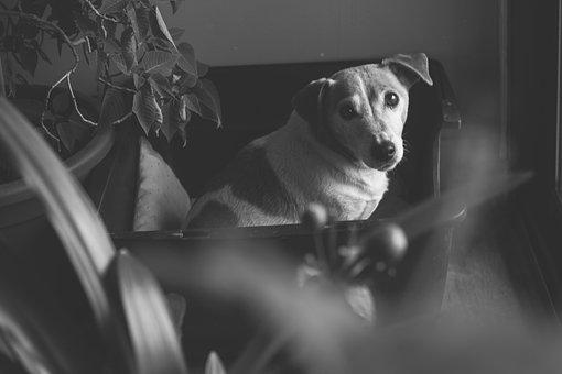 Black, White, Dog, Animal, Domestic Animal, Animals
