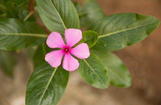 Leaf, Nature, Plant, Approach, Flower, Floral, Garden