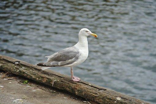 Nature, Bird, Body Of Water, Fauna, Sea, Outdoor, Wing