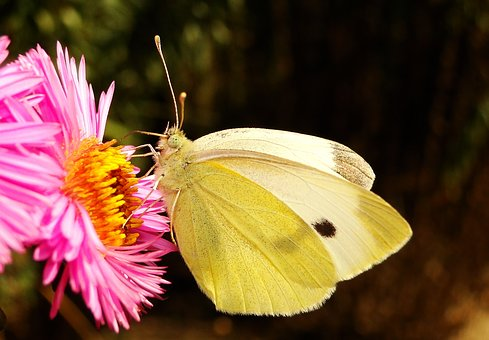 Nature, Insect, Flower, Butterfly Day, At The Court Of