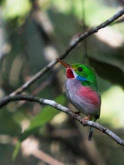 Cuba, Cienaga De Zapata, Matanzas, Bird, Cartacuba