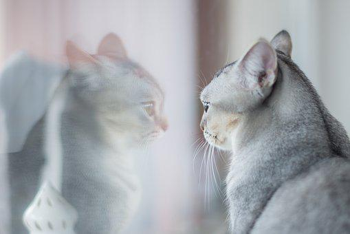 Animal, Cute, Cat, Kitten, Curious, Funny, Sweet, Eyes