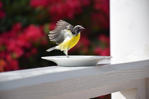 Nature, Outdoor, Garden, Nice, Birds, Color, Summer
