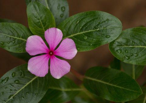 Leaf, Plant, Nature, Flower, Approach, Summer, Color