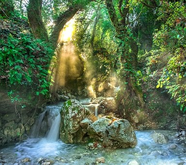 Torrent, Jungle, Trees, Stream, Forest, Water, River
