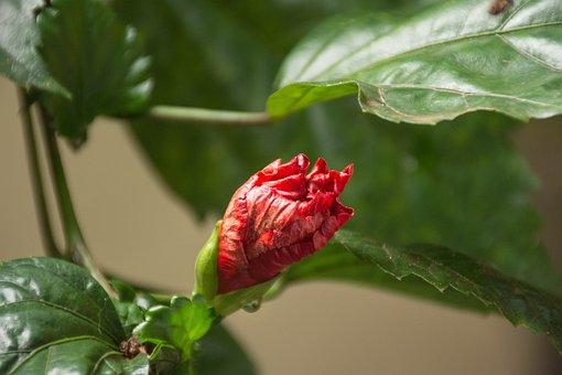 Nature, Leaf, Plant, Approach, Garden, Color, Paraguay