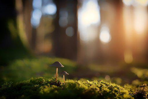 Blur, Nature, Grass, Mushroom, Grasses, Plant, Green