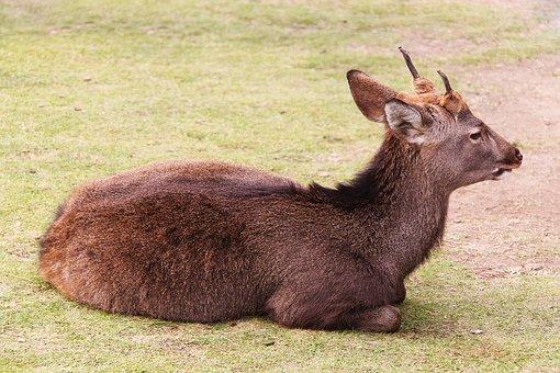 Deer, Beautiful, Mammal, Animal, Nature, Grass