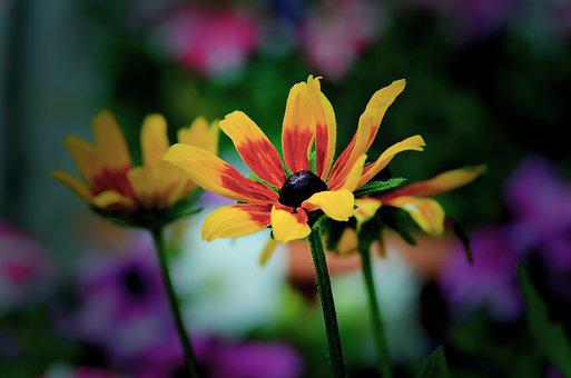 Flower, Nature, Flora, Garden, Petal, Leaf, Outdoors