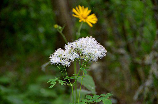 Nature, Plant, Flower, Summer, Outdoor, Pogemon