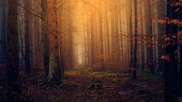 Wood, Darkness, Light, Nature, Secret, Tree, Forest