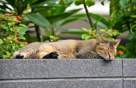 Cat, Sleeping Cat, Relax, Relaxing, Animal, To Relax