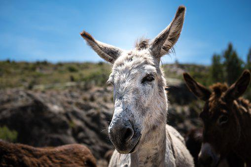 Donkey, Nature, Animal, Wild, Animal World