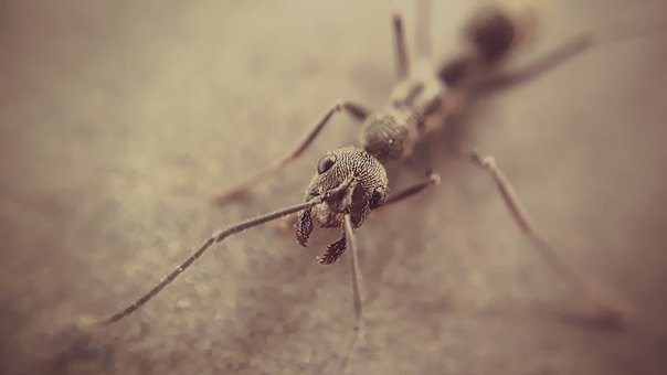 Animal, Nature, Insect, Wildlife, Little, Biology, Pest
