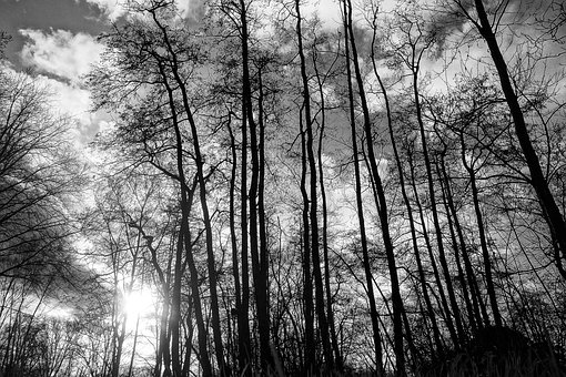 Trees, Wood, Trunks, Tree Silhouettes, Bare Tree