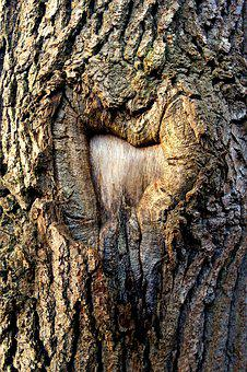 Tree, Trunk, Tree Trunk, Bark, Scar, Scarred Tree