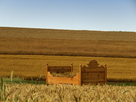 Bed, Cornfield, Bed In The Corn Field, Agriculture