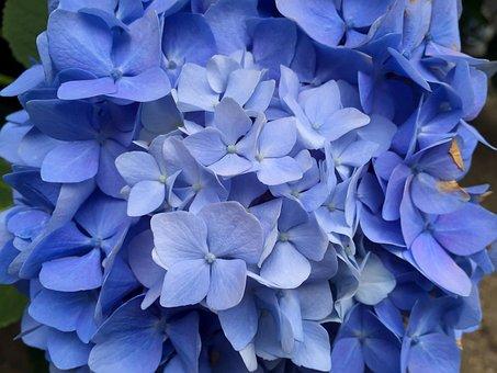 Flower, Nature, Flora, Summer, Garden, Blooming