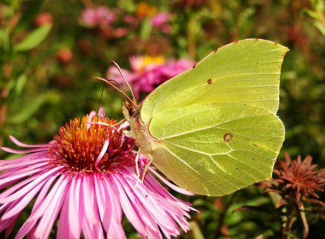 Nature, Flower, Insect, Butterfly Day, Plant, Animals