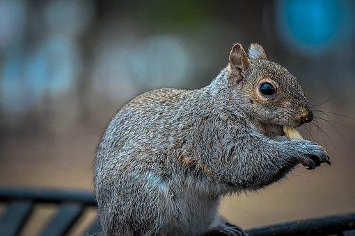 Mammal, Wildlife, Squirrel, Nature, Rodent, Cute