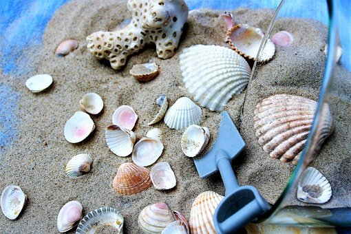 Cup, Seashell, Sand, Relaxation, Dream, Memory, Holiday