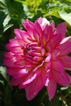 Flora, Nature, Flower, Garden, Summer, Petal, Blooming