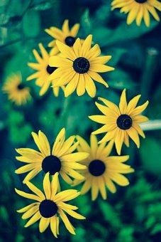 Flower, Summer, No One, Nature, Plant, Leaf, Garden
