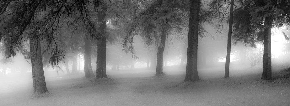 Fog, Nature, Light, Mist, Tree, Forest, Outdoor