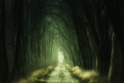 Secret, Darkness, Nature, Tunnel, Tree, Forest, Passage