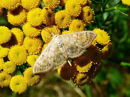 Nature, Plant, Flower, Summer, Garden, Floral, Animals
