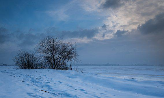 Winter, Snow, Nature, Coldly, Ice, Tree, Bay