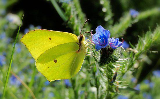 Butterfly Day, Nature, Insect, At The Court Of, Flower