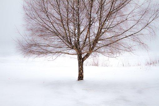 Winter, Tree, Snow, Landscape, Branch, Cold, Wood
