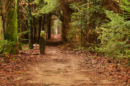 Wood, Tree, Nature, Path, Leaf, Forest, Away, Leaves
