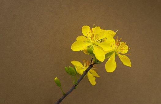 Background, Leopard, Spring, Tet Viet, Yellow