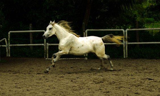 Mammal, Horse, Cavalry, Action Energy, Stallion