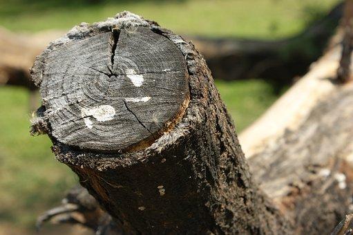 Nature, Tree, Wood, Tree Log, Bark, Firewood