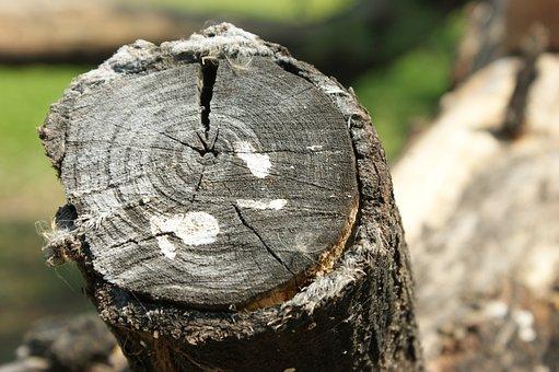 Nature, Tree Log, Wood, Tree, Outdoors, Bark